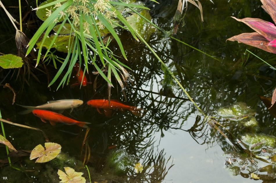 fishinthepond